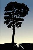 Single tree at sunset — Stock Vector
