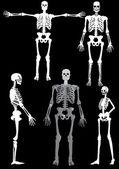 Human skeletons on black — Stock Vector