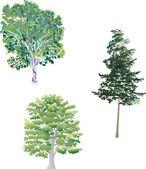 Three green trees — Stock Vector