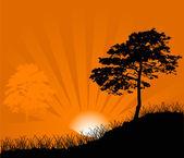 Orange sun between trees — Stock Vector