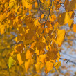 Autumn branch on gold — Stock Photo #6414616