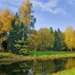 Fir and birch fall forest — Stock Photo
