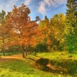 Autumn oak in park — Stock Photo