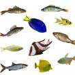 Eleven isolated fishes — Stock Photo #6414929