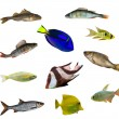 Stock Photo: Eleven isolated fishes