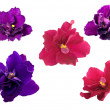 Five violet flowers — Stock Photo
