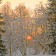 Stock Photo: Pink sunset in winter forest
