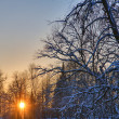 Stock Photo: Sunset between snow branches