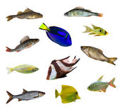 Eleven isolated fishes — Stock Photo