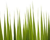 Изолированная зеленая трава — Стоковое фото