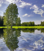 Green birches with reflection — Stock Photo