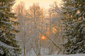 Pink sunset in winter forest — Stock Photo