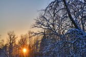 Sunset between snow branches — Stock Photo