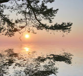 Sunset with pine and reflection — Stock Photo