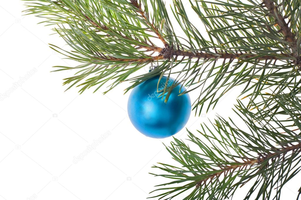 Christmas tree branch with blue decoration isolated on white background  Stock Photo #6414813
