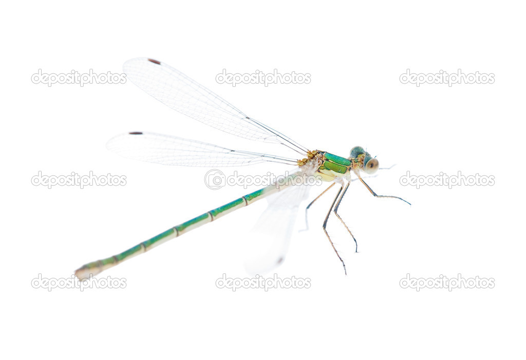 Small green dragonfly isolated on white background — Stock Photo #6414841