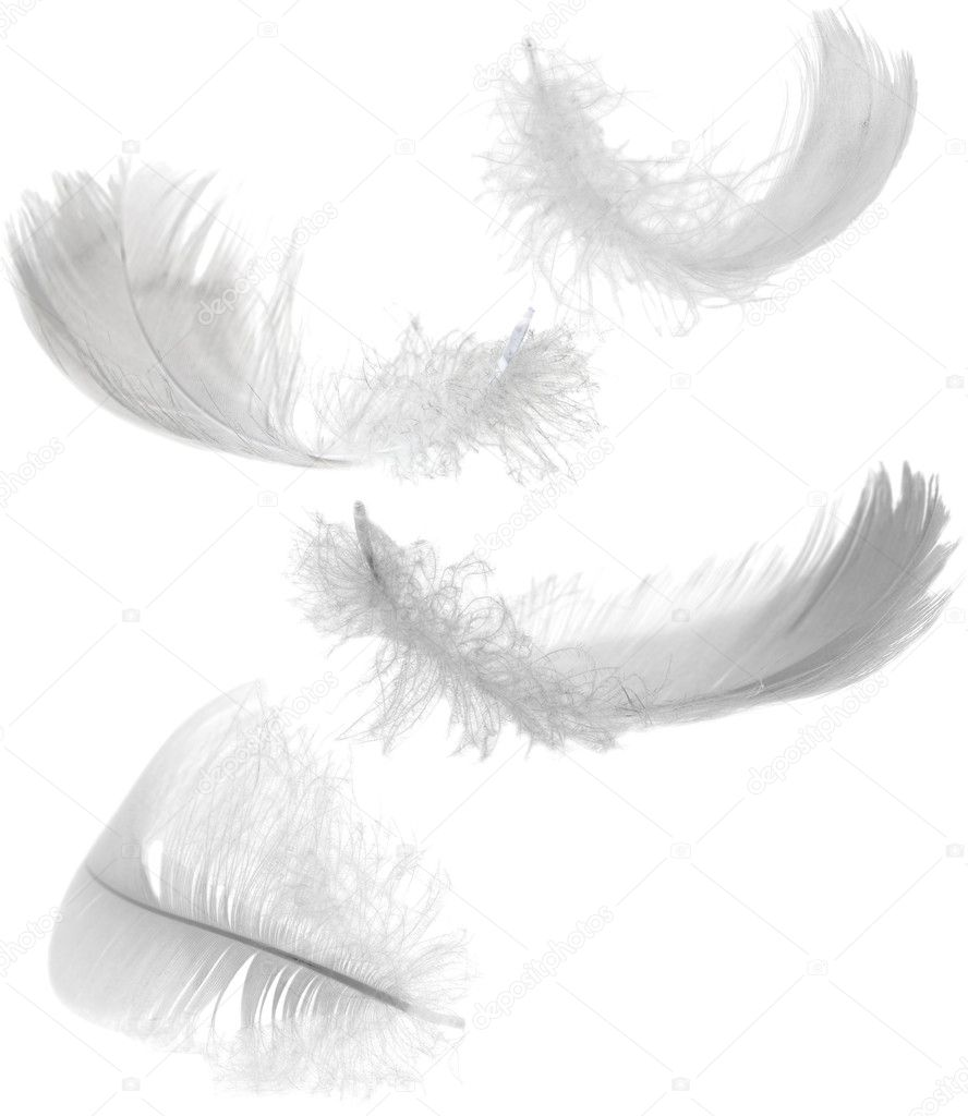 Four white feathers stock photo dr pas 6414941 - Suspension plumes blanches ...