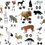 Постер, плакат: Color animals and tracks