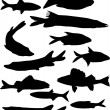 Set of twelve fish silhouettes — Stock Vector #6415622