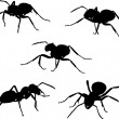 Set of five ant silhouettes — Stock Vector