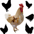 Royalty-Free Stock 矢量图片: Roosters collection