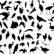 Fifty three bird silhouettes — Stock Vector