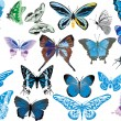 Twenty one blue butterflies - Stock Vector