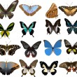 Set of sixteen color butterflies — Imagen vectorial