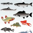 Royalty-Free Stock Vector Image: Set of fishes on light background