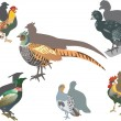 Pheasant and other birds — Stock Vector