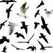 Stock Vector: Nineteen gulls collection