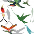 Hummingbirds collection on white — Stock Vector #6416618