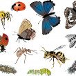 Stock Vector: Twelve color insects collection