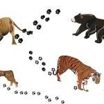 Постер, плакат: Predators and its tracks