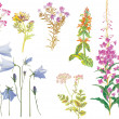 Summer wild flowers collection — Stock Vector #6417226