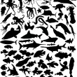 Stock Vector: Huge set of sea animals