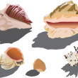 Stock Vector: Shellfish collection