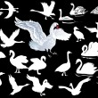 White swan collection on black — Stock Vector