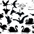 Swimming birds silhouettes - Stock Vector