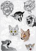Cats portraits illustration — Stock Vector