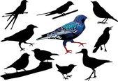 Starar och andra fåglar — Stockvektor