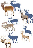 Horned animals with shadows — Stock Vector