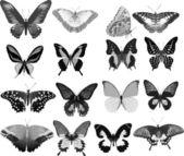 Sixteen gray butterflies — Stock Vector