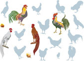 Roosters on white collection — Stock Vector