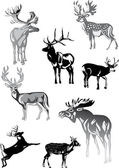 Eight grey deers on white — Stock Vector