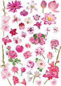 Large collection with pink flowers — Stock Vector