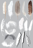 Fifteen feathers isolated on grey — Stock Vector