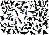 Set of different flying birds — Stock Vector