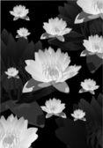 Grijze lily bloem achtergrond — Stockvector