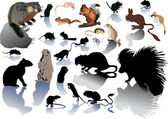 Conjunto de rodentson blanco — Vector de stock